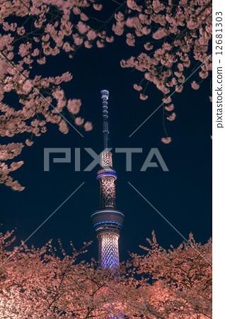 樱花 夜晚的樱花树 东京晴空塔