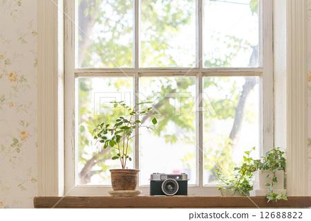 图库照片: 在窗户旁 窗边 盆栽
