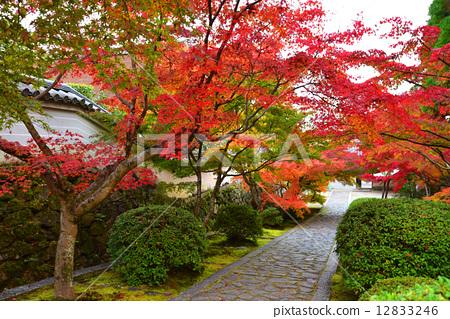 秋 首页 照片 植物_花 树_树木 红叶 红叶 秋天 秋  *pixta限定素材仅