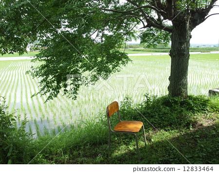 椅子 在树下面 透过树叶的阳光