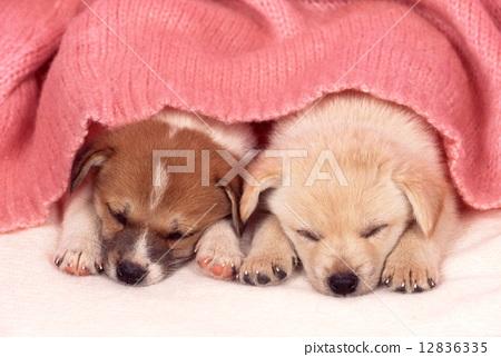图库照片: 小狗 可爱 白底