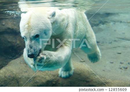 熊类 肉食的 首页 照片 设施_建筑_街道 商业设施 动物园 北极熊 熊类