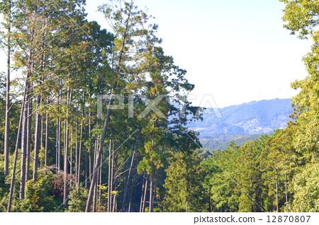风景_自然 森林_森林 森林 照片 木头 木 山林 首页 照片 风景_自然