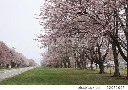 树花在两边的道路图片