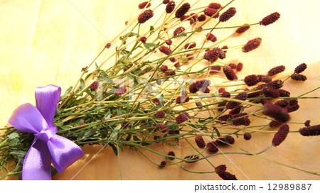 照片 植物_花 花束 花束 干花 地榆 花束  *pixta限定素材仅在pixta