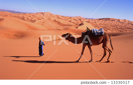 图库照片: 撒哈拉 撒哈拉大沙漠 骆驼