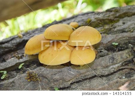 兴义奇香楼风景区蘑菇