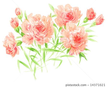 图库插图: 康乃馨 水彩画 花朵