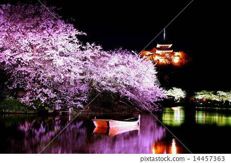 植物_花 樱花 樱花 产经花园 夜樱 夜晚的樱花树  *pixta限定素材仅在