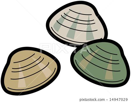 图库插图: 双壳贝类 双壳纲 矢量