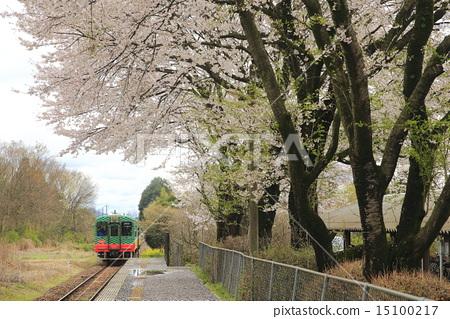 图库照片: 樱花 摩卡铁路 樱桃树