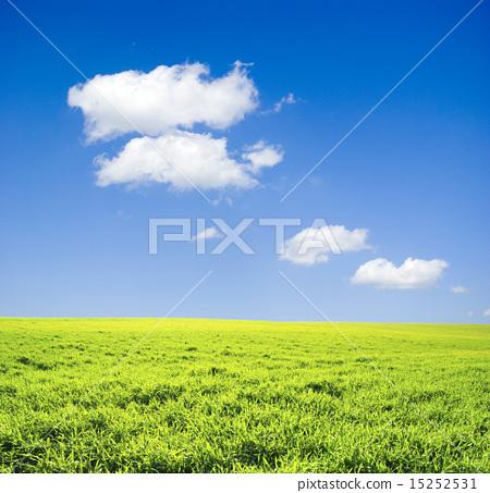 图库照片: field