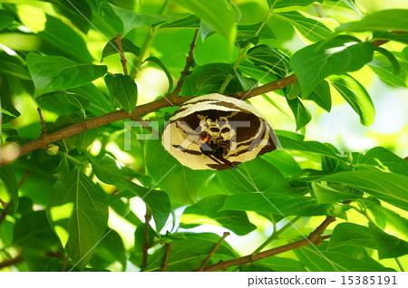 梦见蜜蜂窝_图库照片: 黄蜂 蜜蜂 窝