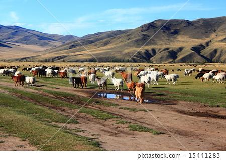 图库照片: 蒙古 风景 秋天