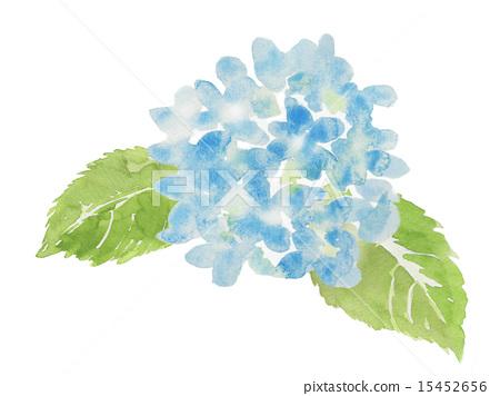 图库插图: 水彩画 绣球花 花朵