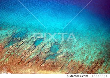 首页 照片 鱼_海鲜 海水鱼 珊瑚 珊瑚 珊瑚礁 蓝色  *pixta限定素材仅