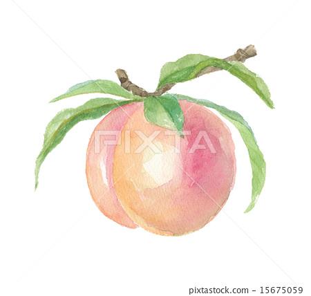 图库插图: 桃子 水果 水彩画