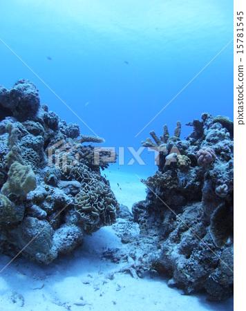 图库照片: 沙地 珊瑚 西表岛