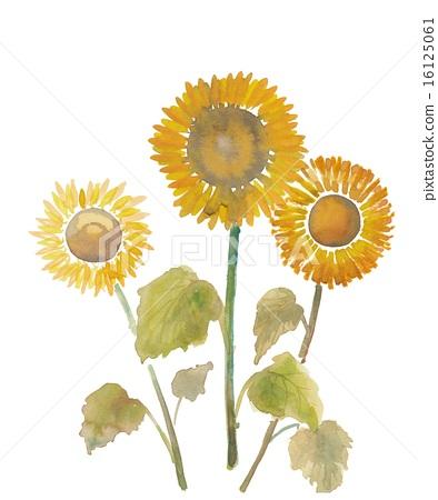 水彩 首页 插图 植物_花 向日葵 插图 水彩画 水彩  *pixta限定素材