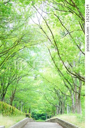 姿势_表情_动作 行为_动作 行走 负离子 健康 树  *pixta限定素材仅在