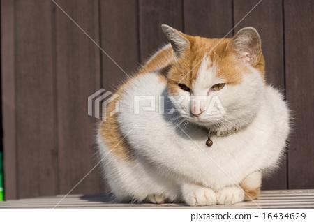 首页 照片 姿势_表情_动作 表情 可爱 白色 猫 猫咪  *pixta限定素材