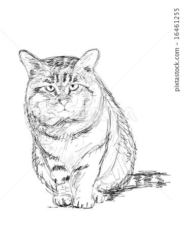 图库插图: 钢笔画 动物 猫