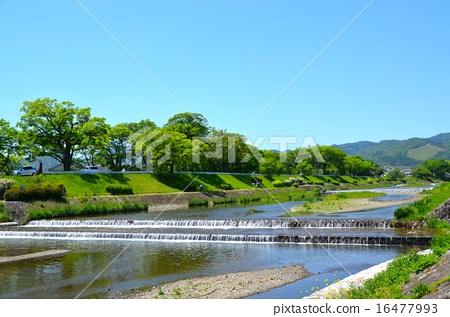 图库照片: 风景 京都 鸭川