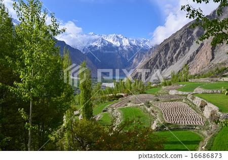 图库照片: 巴基斯坦 风景 原野
