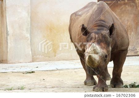 图库照片: 黑犀牛 犀牛 动物