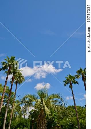 圖庫照片: 風景 椰子樹 晴朗
