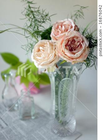 图库照片: 白底 玫瑰 玫瑰花