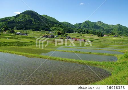 风景_自然 田地_稻田 稻田 照片 农村风景春天稻米稻田 首页 照片