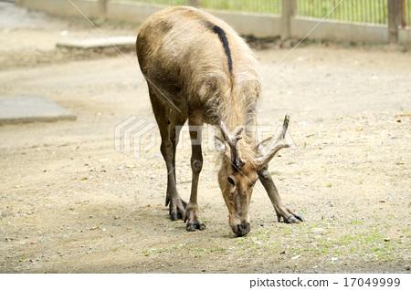 图库照片: 濒危物种 多摩动物园 稀有动物