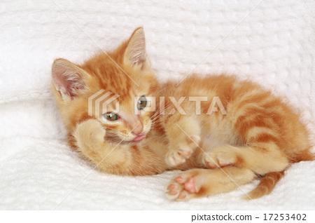 小猫可爱头像白底