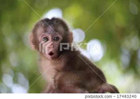 迷你猴子可爱图片大全