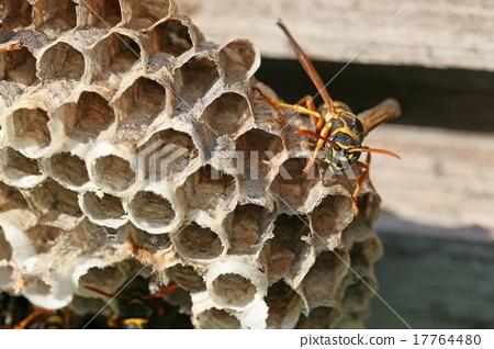 梦见蜜蜂窝_图库照片: 纸黄蜂 窝 蜜蜂