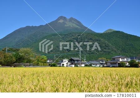风景_自然 田地_稻田 稻田 照片 稻田 由布岳 丰收 首页 照片 风景