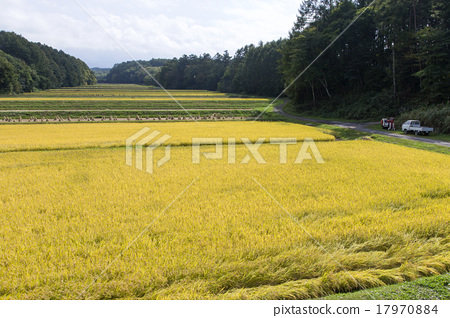 图库照片: 山田的风景