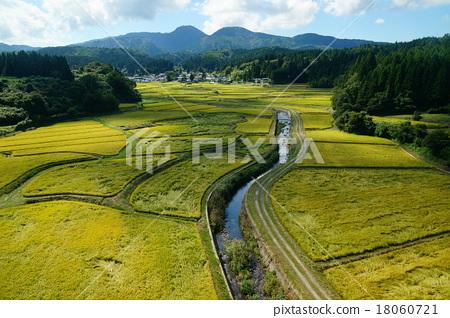 风景_自然 田地_稻田 稻田 照片 稻田 水稻 风景 首页 照片 风景_自然