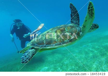 壁纸 动物 海底 海底世界 海洋馆 水族馆 鱼 鱼类 桌面 450_318