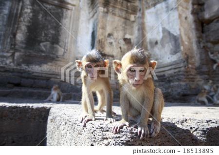 图库照片: 猴子 可爱 小猴子