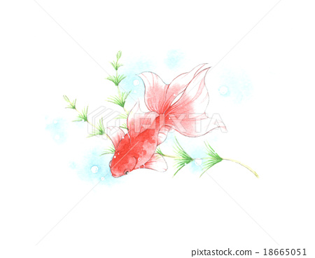 图库插图: 金鱼 水彩画 鱼