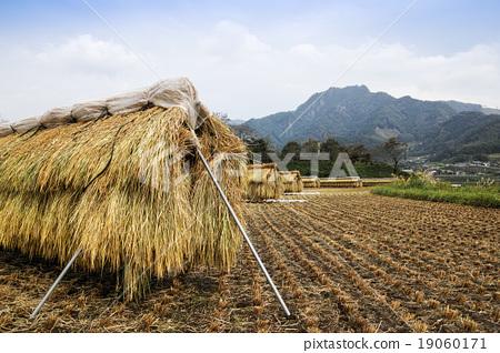 图库照片: 高千穗收获的风景