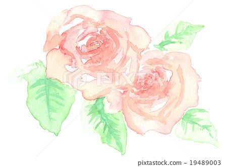 图库插图: 水彩 水彩画 玫瑰