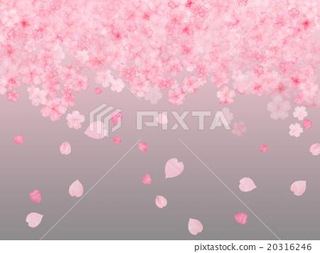 插图 植物_花 樱花 樱花 樱花 樱桃树 樱桃花瓣雨  *pixta限定素材仅