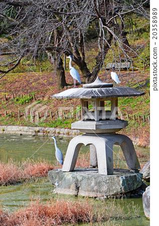 图库照片: 池塘 咸水湖 鹤见绿地