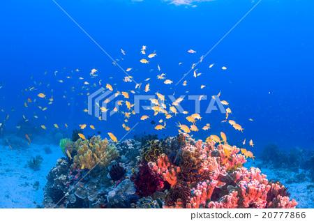 图库照片: 海底的 海里 珊瑚