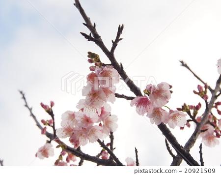 图库照片: 分支 树枝 春天