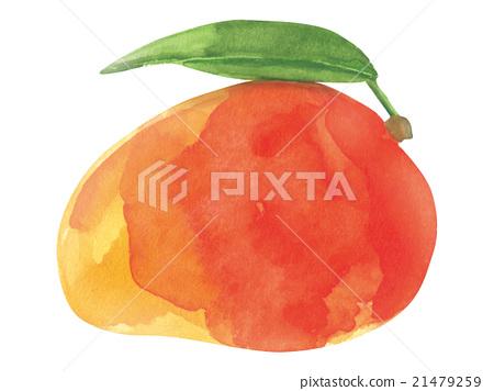 图库插图: 水果 芒果 水彩画
