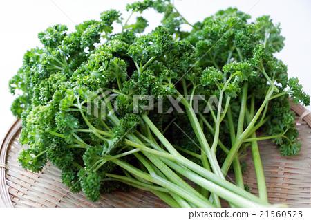 香菜 首页 照片 蔬菜_食品 叶_叶菜类 欧芹 香菜  *pixta限定素材仅在